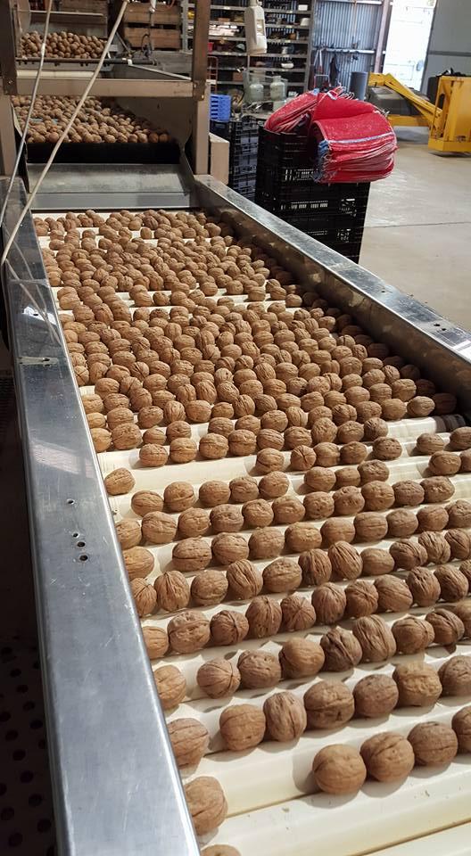 premier australian walnuts